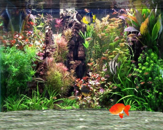 Un acquario 3D come screen saver gratis.